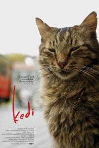 Город кошек - Стамбул глазами пушистых друзей | Таня, что посмотреть?