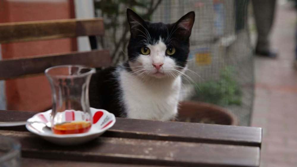«Город кошек»: Стамбул глазами пушистиков